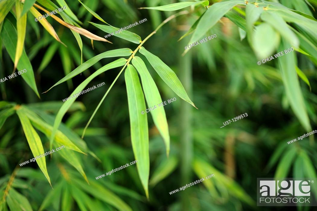 Stock Photo: Bamboos planted outside Hunan Provincial Museum.