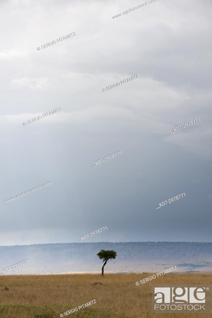 Stock Photo: A rainstorm approaching in the Masai Mara plains, Kenya.
