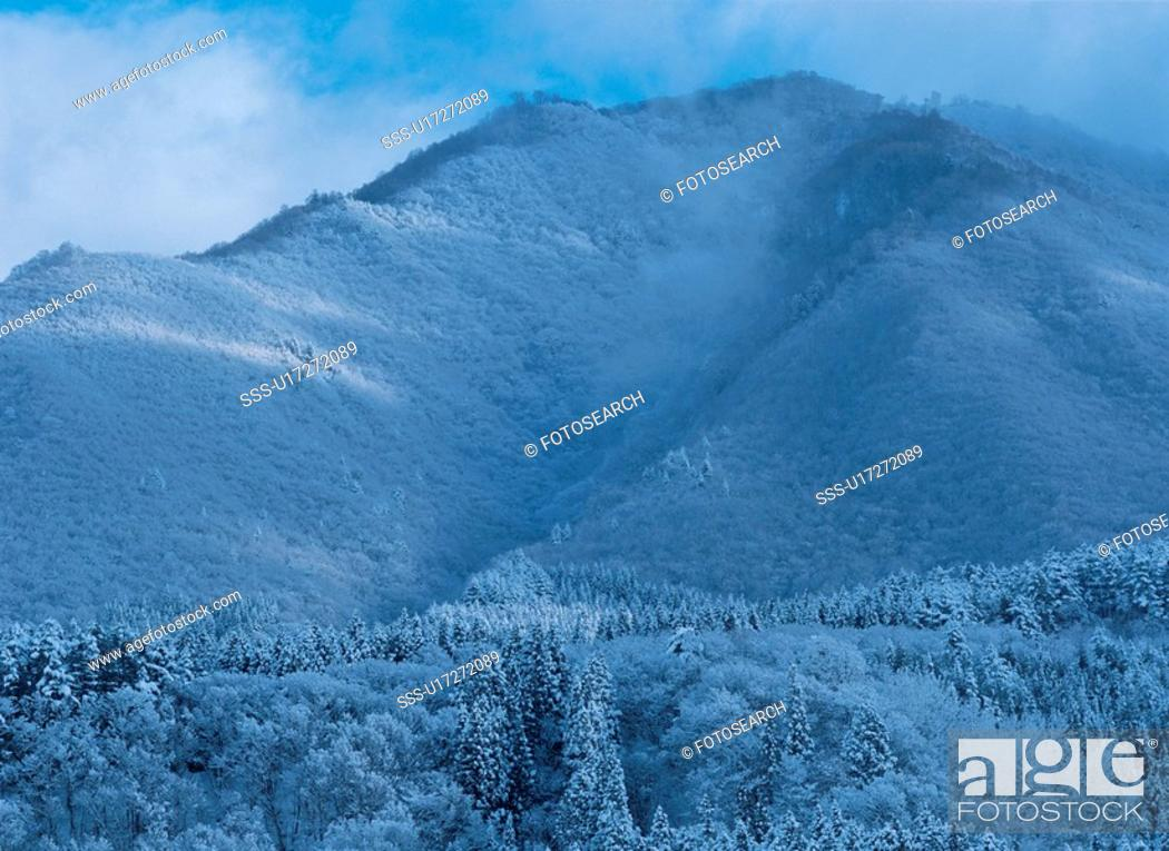 Stock Photo: Mountain And Forest In Winter.