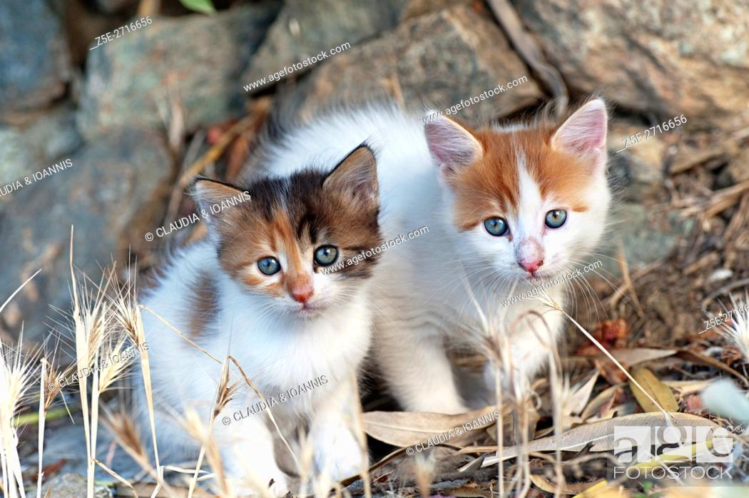 Stock Photo: Two kittens sitting outdoors side by side and looking at camera.