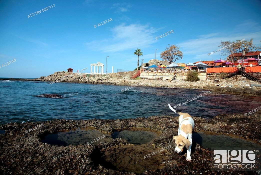 Stock Photo: DOG, ROCK POOLS, CAFE & THE APOLLO TEMPLE; SIDE, TURKEY; 16/11/2007.