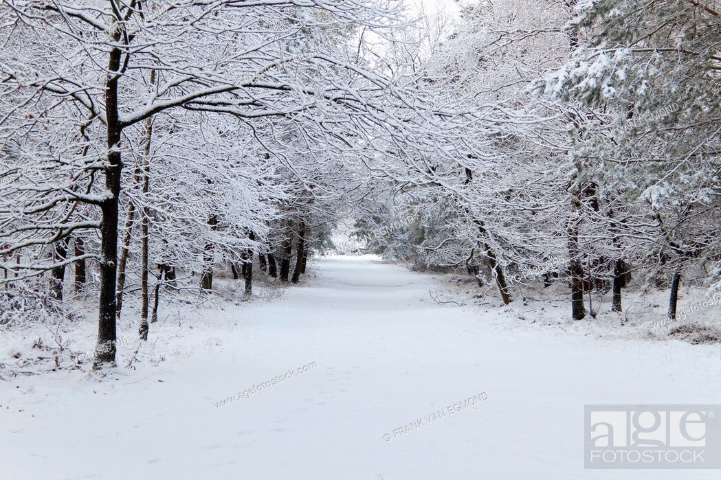 Stock Photo: Untouched snow in a forest road.
