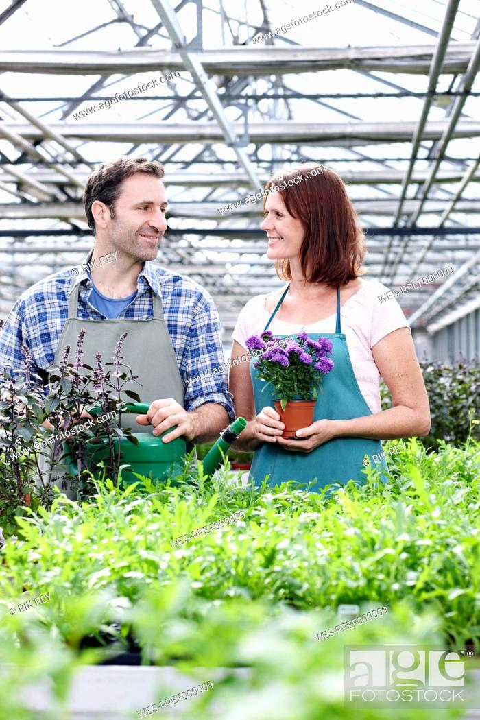 Stock Photo: Germany, Bavaria, Munich, Mature man and woman in greenhouse with rocket and basil plant.