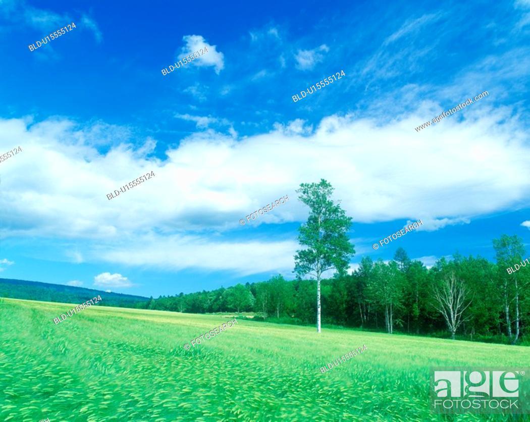 Stock Photo: Tree and blue sky.
