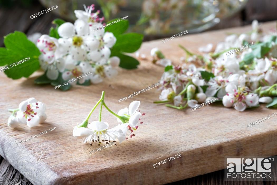 Stock Photo: Fresh hawthorn flowers on a table.