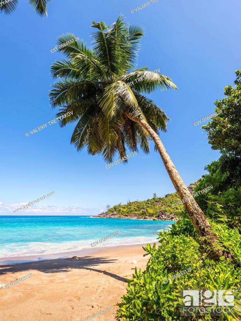 Stock Photo: Dream Seascape Coast - Idyllic paradise palm Anse Major beach on the North-West side of Mahe Island, Seychelles, Indian Ocean, Eastern Africa.