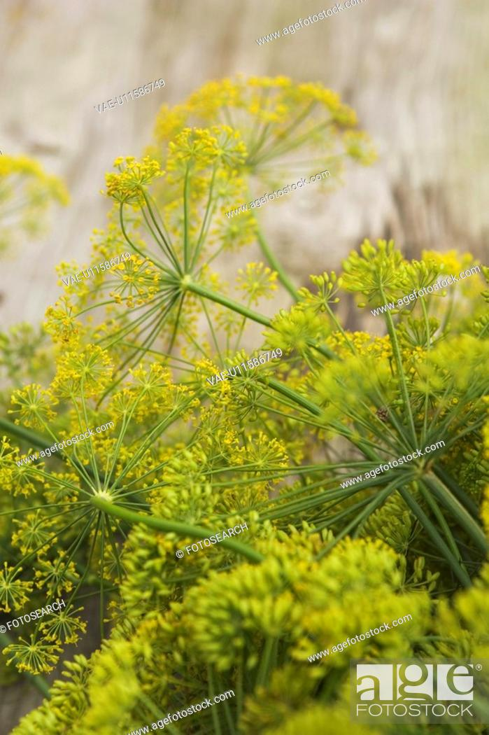 Stock Photo: Branch, Bud, Close-Up, Day, Flower.