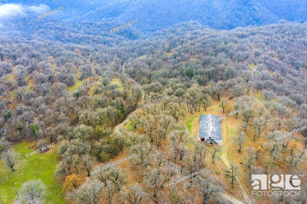 Stock Photo: Deciduous forest and hut. Aerial view. Aranarache area. Navarre, Spain, Europe.