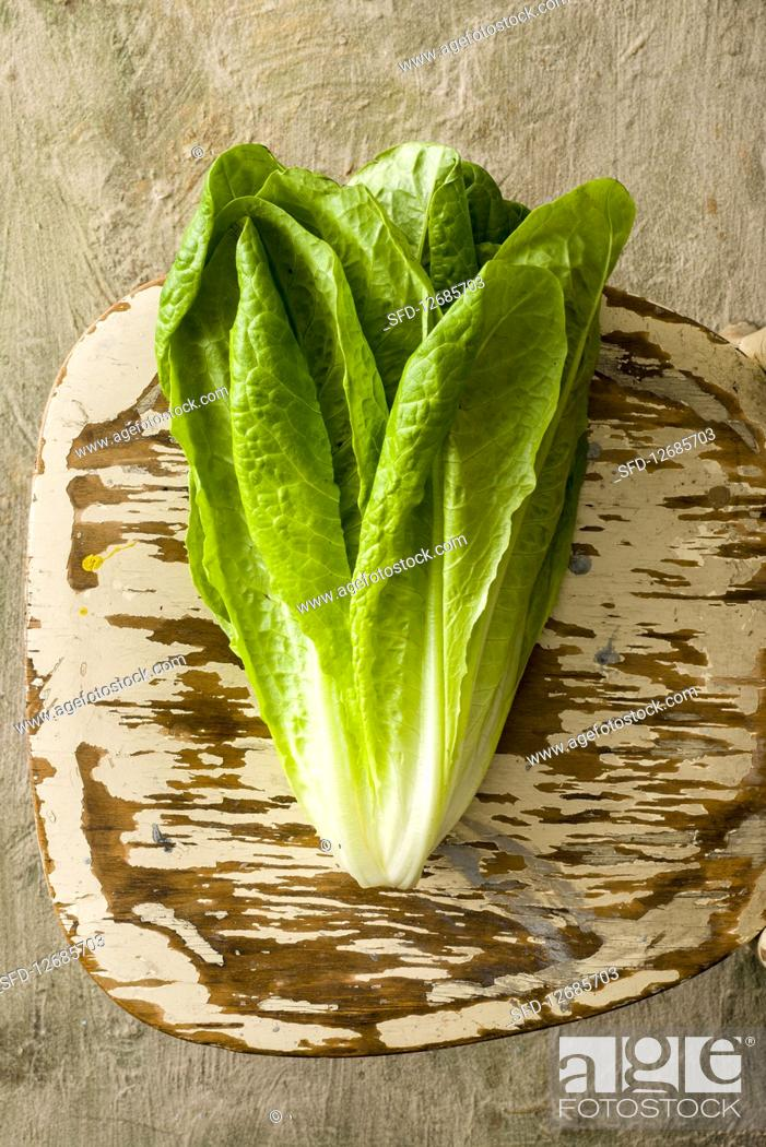 Stock Photo: Romain Lettuce.