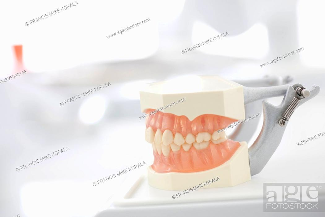 Stock Photo: Germany, Exhibition dentures in dental office.