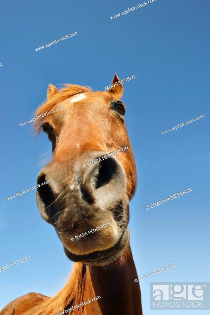 Stock Photo: Brown horse against clear sky low angle view close-up of snout.