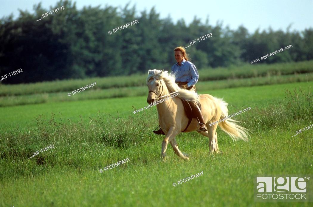 Stock Photo: Fell Pony with rider.