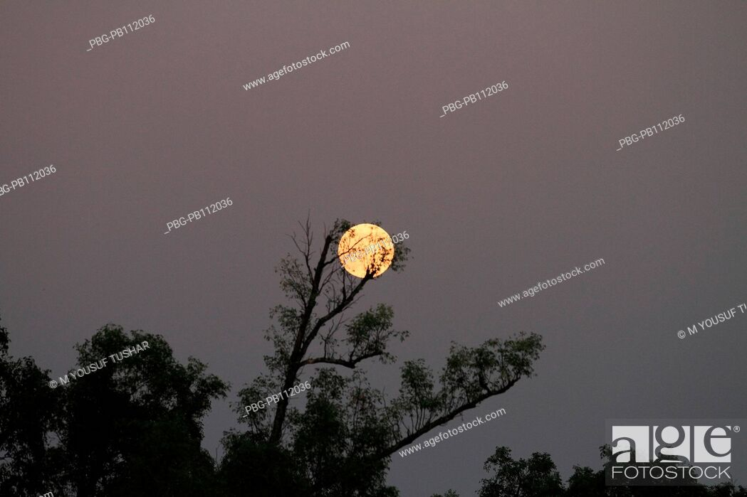Imagen: The moon picture taken from sundarban The Sundarbans, a UNESCO World Heritage Site and a wildlife sanctuary The largest littoral mangrove forest in the world.