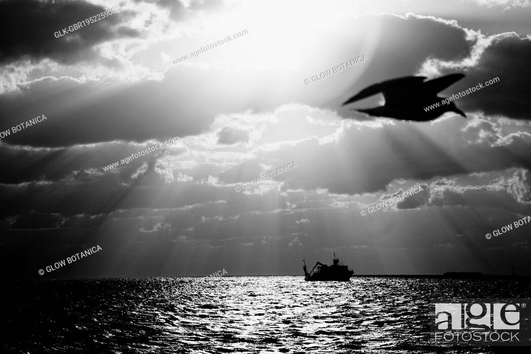 Stock Photo: Bird flying over the ocean with a ship in the background, Key West, Florida, USA.