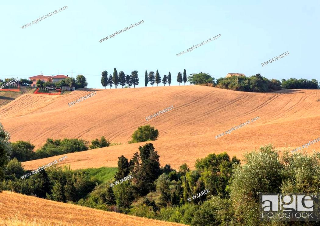 Stock Photo: Panoramic view of olive groves and fields on rolling hills of Abruzzo.