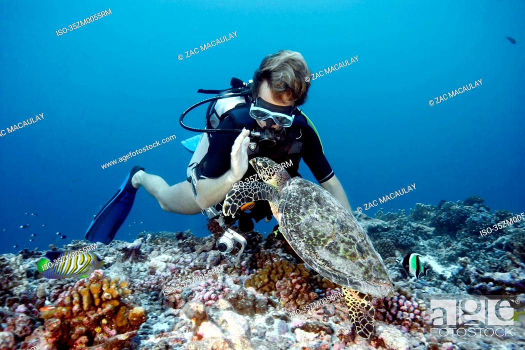 Stock Photo: Diver swimming with hawksbill turtle.