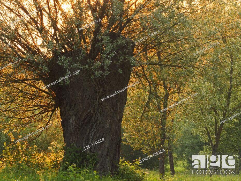 Stock Photo: Sunset. Mielnik. Podlasie region, Poland.