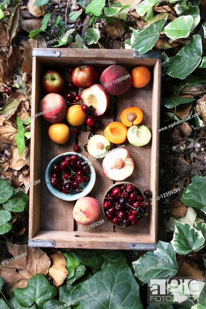 Stock Photo: Fresh stone fruits in a wooden box, surrounded by leaves (top view).