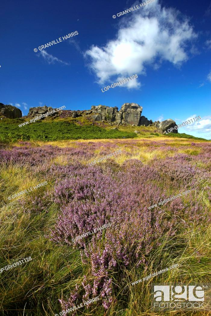 Stock Photo: England, West Yorkshire, Ilkley Moor. The Cow and Calf, a large rock formation consisting of an outcrop and boulder, also known as Hangingstone Rocks.