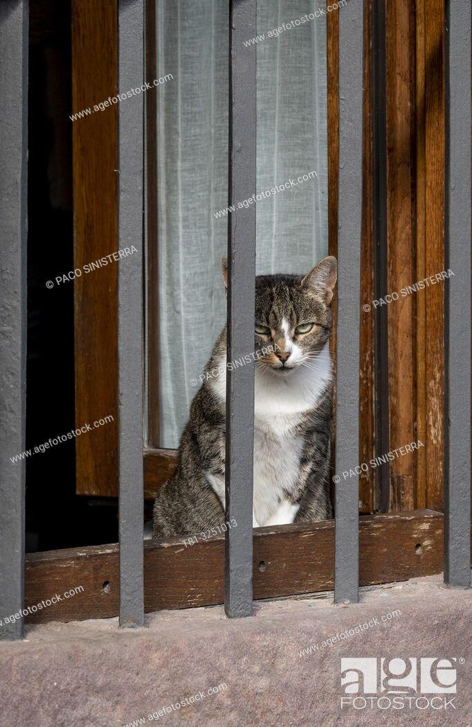 Stock Photo: Cat basking in the window. Teruel, Aragon, Spain.