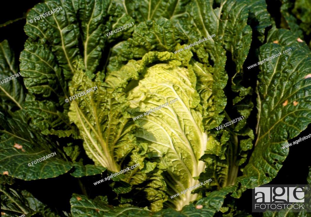 Stock Photo: cuisine, nature, food, green, scene, food material, landscape.