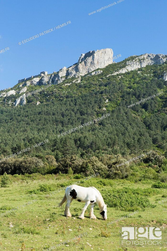 Stock Photo: France, Aude, Duillac sous Peyrepertuse, ruins of 12th century Cathare castle.