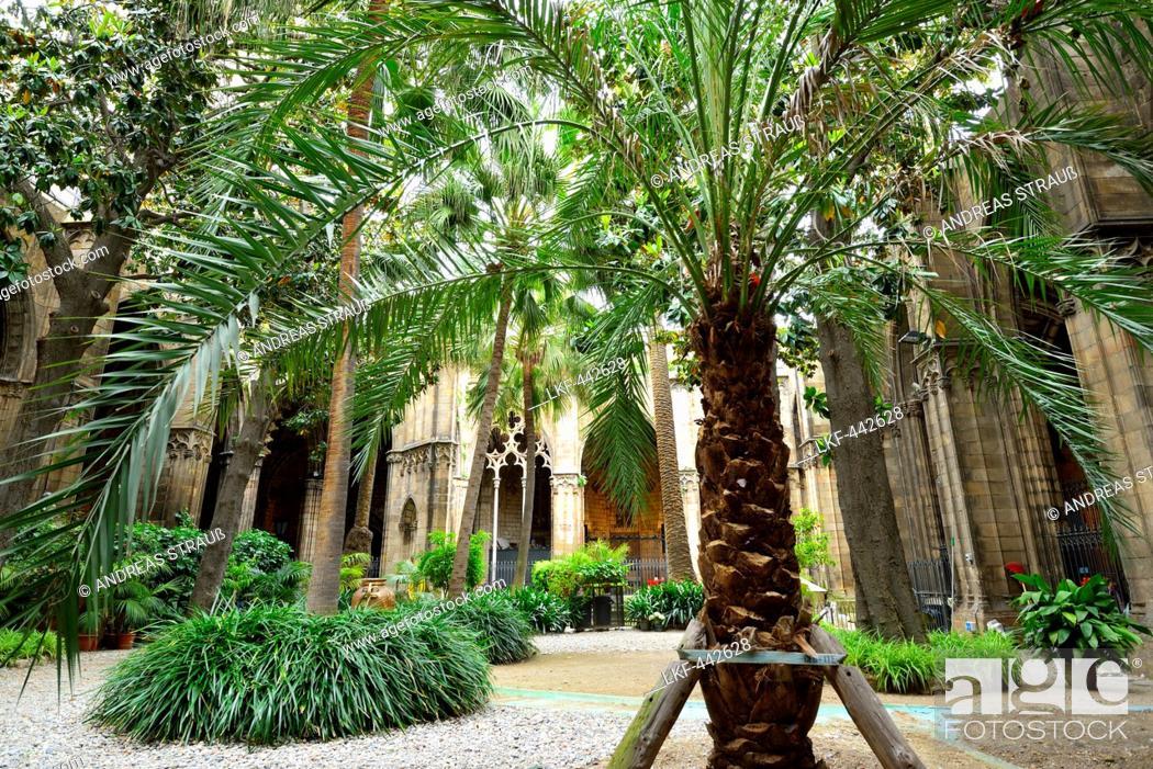 Photo de stock: Atrium and cloister of cathedral, La Catedral de la Santa Creu i Santa Eulalia, Gothic architecture, Barri Gotic, Barcelona, Catalonia, Spain.