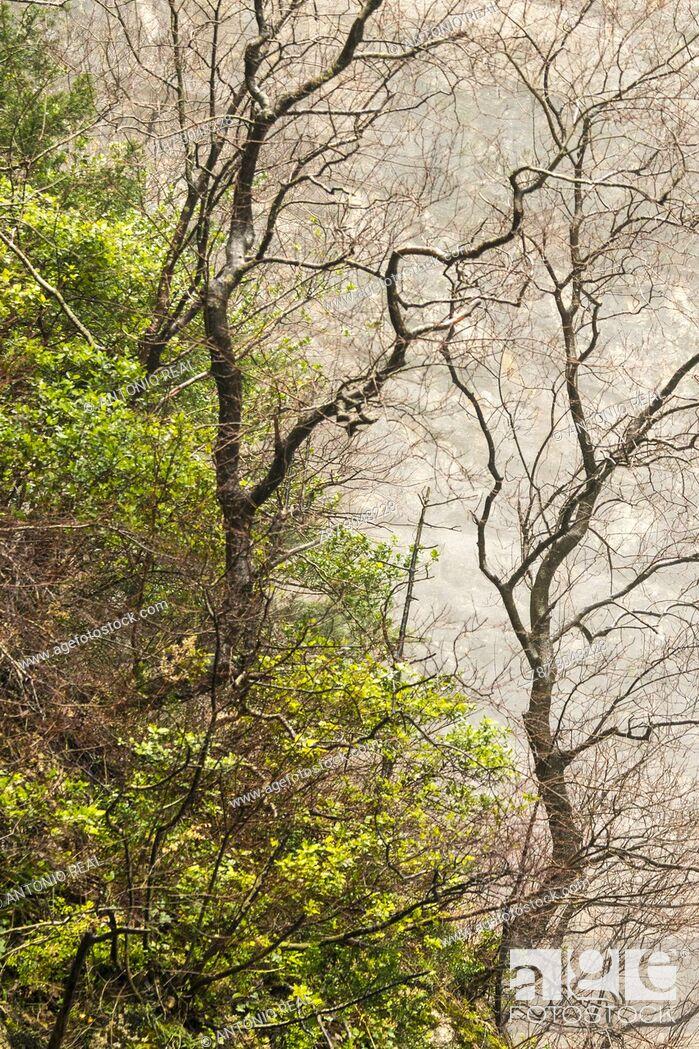 Stock Photo: Reventón del río Mundo. Parque Natural de Los Calares. Riopar. Albacete province. Spain.