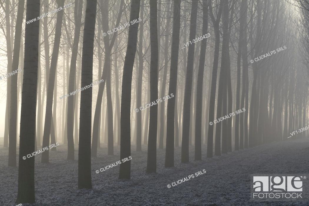 Stock Photo: Piedmont Plain, Turin district, Piedmont, Italy. Winter air frost in the Piedmont plain.