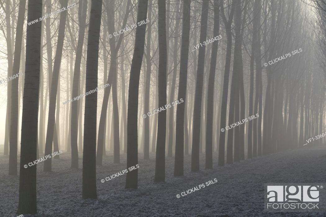 Imagen: Piedmont Plain, Turin district, Piedmont, Italy. Winter air frost in the Piedmont plain.