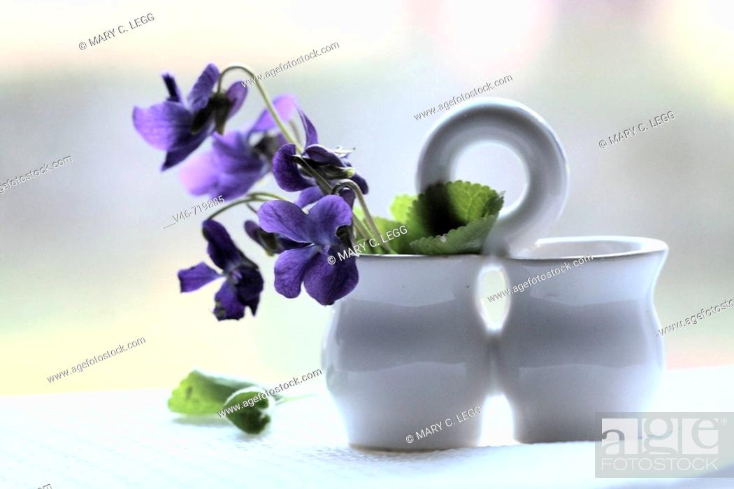 Stock Photo: Miniature white salt and pepper holder holds a nosegay of purple wild violets against the window on white cloth  The backdrop is white light  Some leaves have.