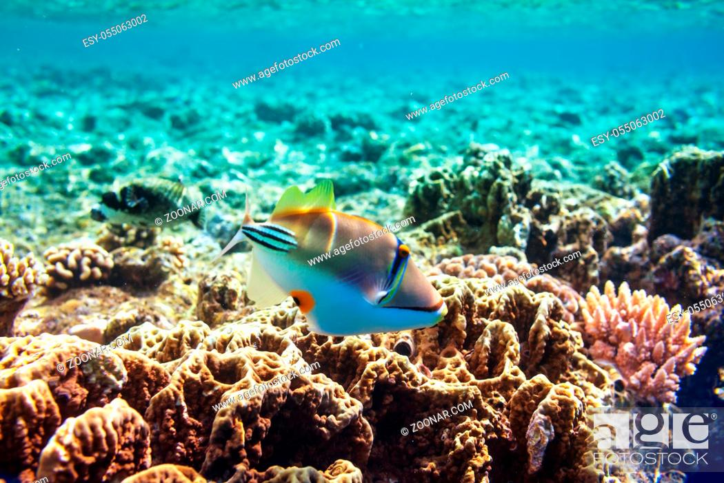 Imagen: Living Coral reef in Red Sea, Egypt. Natural unusual background.