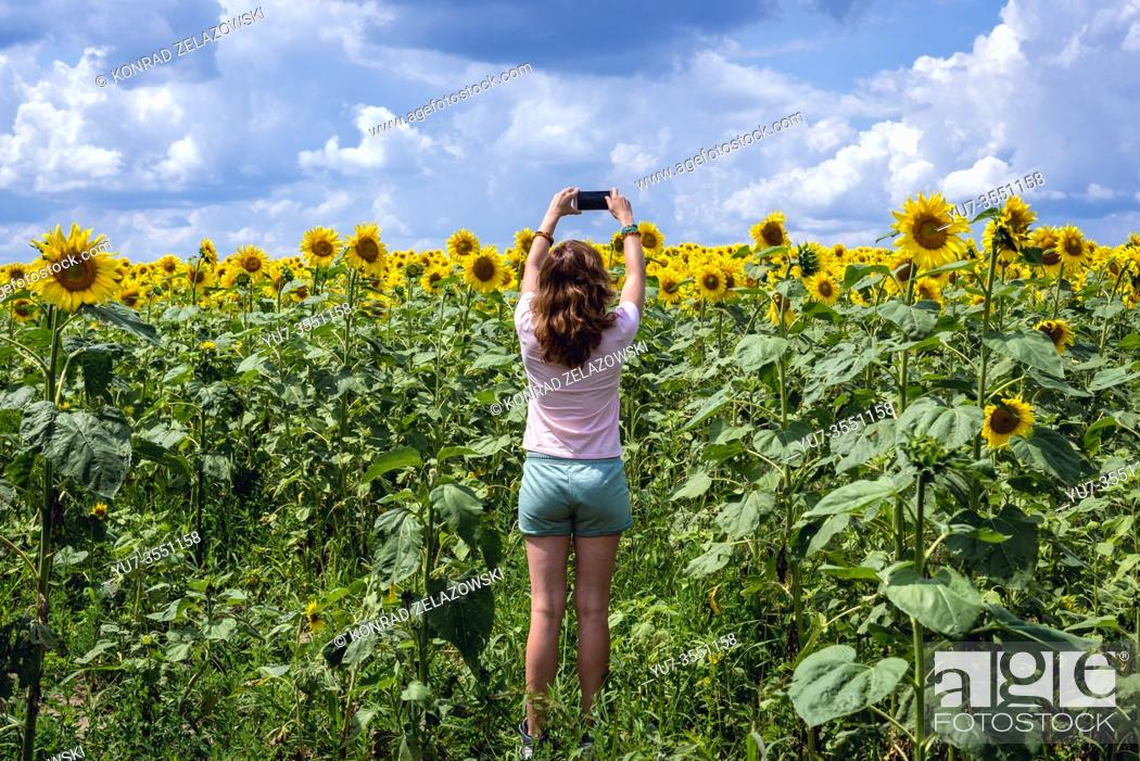 Imagen: Tourist on large field of sunflowers in Riscani District of Moldova.