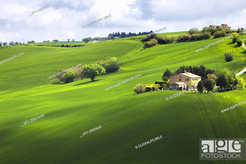 Photo de stock: Agricultural fields in the Marche's hills, Morrovalle village, Macerata district, Marches, Italy.