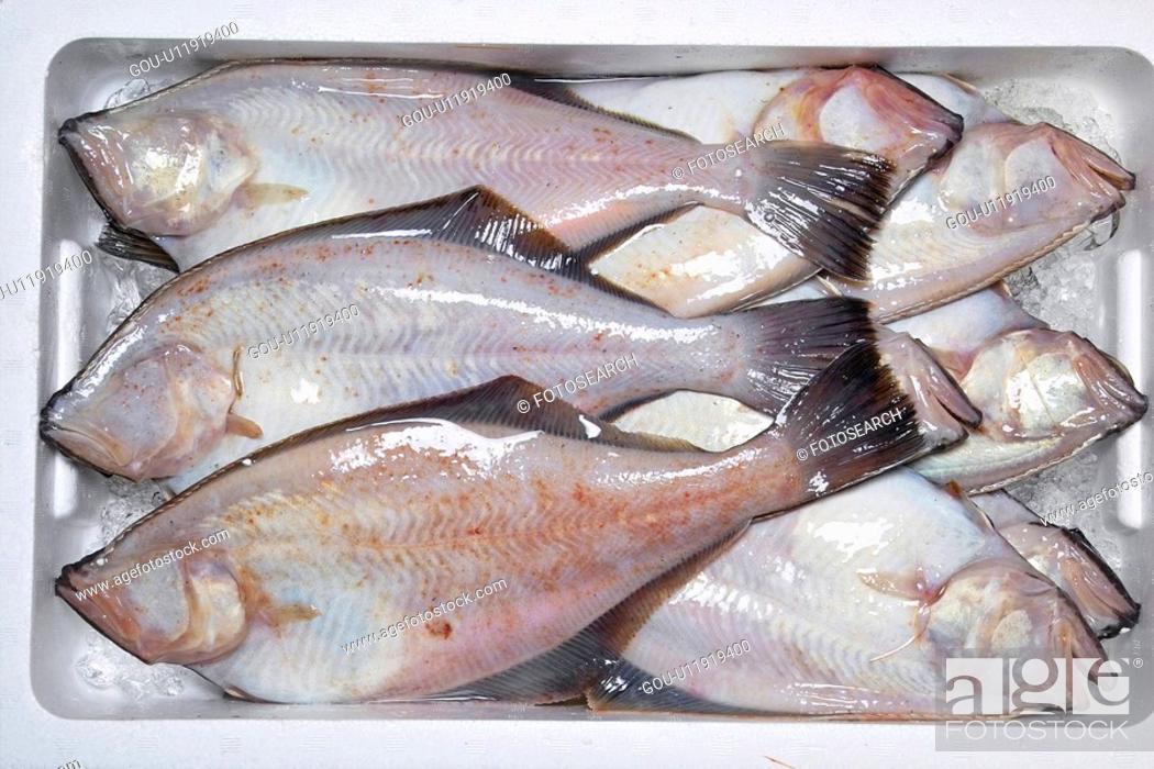 Stock Photo: Flatfish.