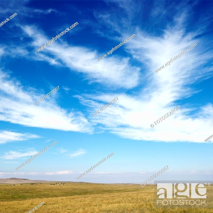 Stock Photo: Sky scene of golden field and wispy cirrus clouds.