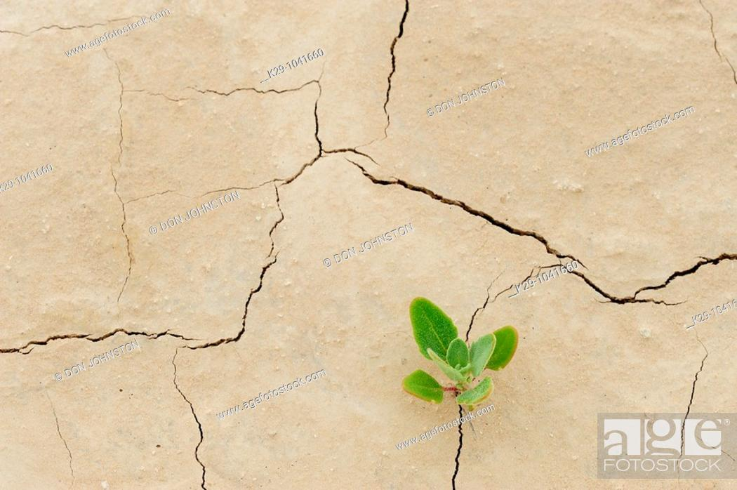 Stock Photo: Patterns in cracked mud with seedlings.