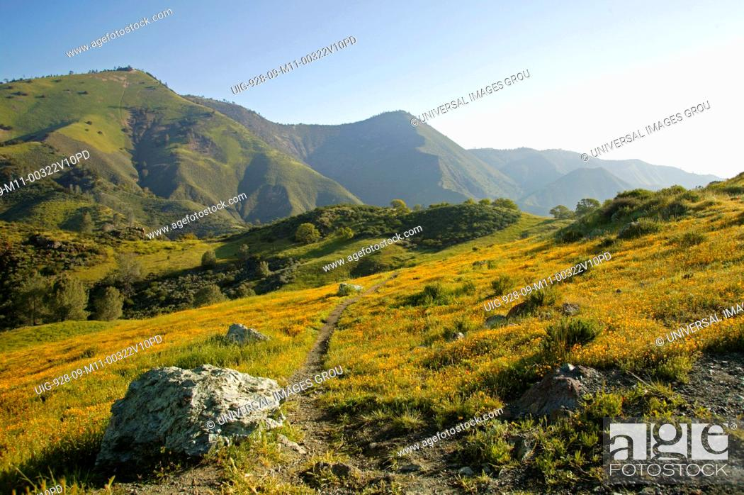 Stock Photo: Central California. Figueroa Mountain In Los Padres National Forest.