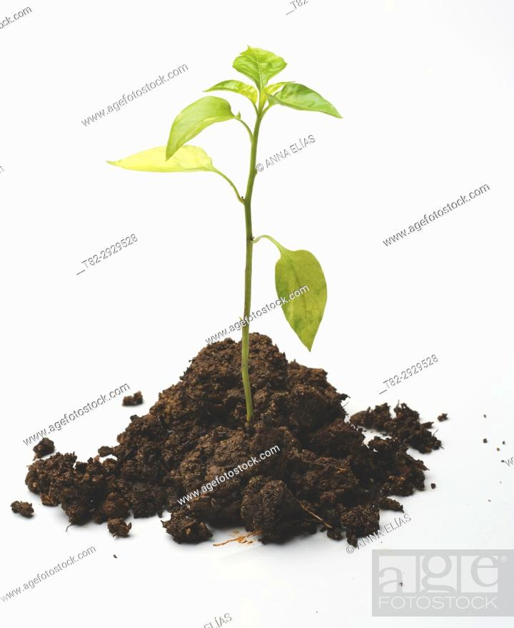 Stock Photo: born on land delicate plant on white background.