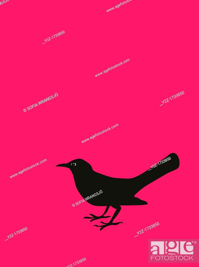 Stock Photo: Black bird.