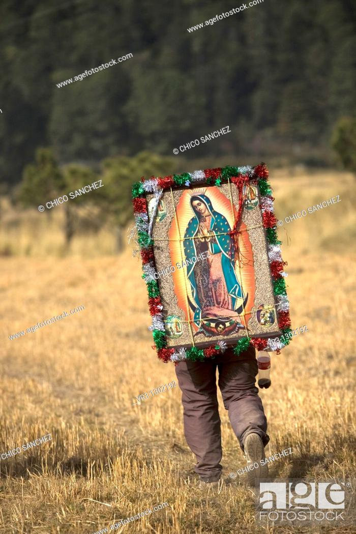 Stock Photo: A pilgrim carrying an image of the Virgin of Guadalupe walks through a field as he travels to reach the Basilica of Guadalupe in Mexico City, December 7.