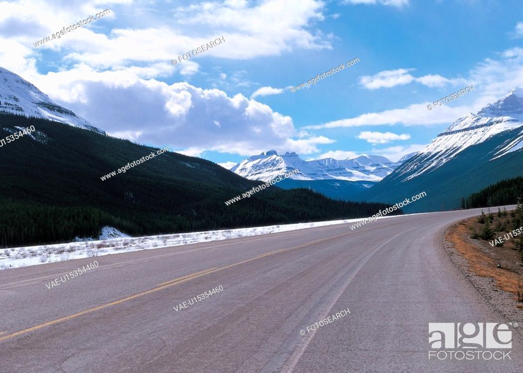 Stock Photo: tree, landscape, forest, mountain, scenic, scenery.