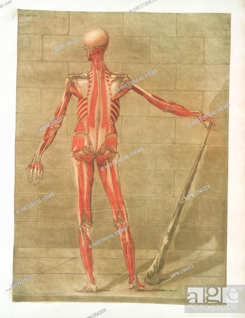 Imagen: Cette planche représente la troisieme couche des muscles., Pl. 9 Additional title: Muscles of the human body, posterior view.