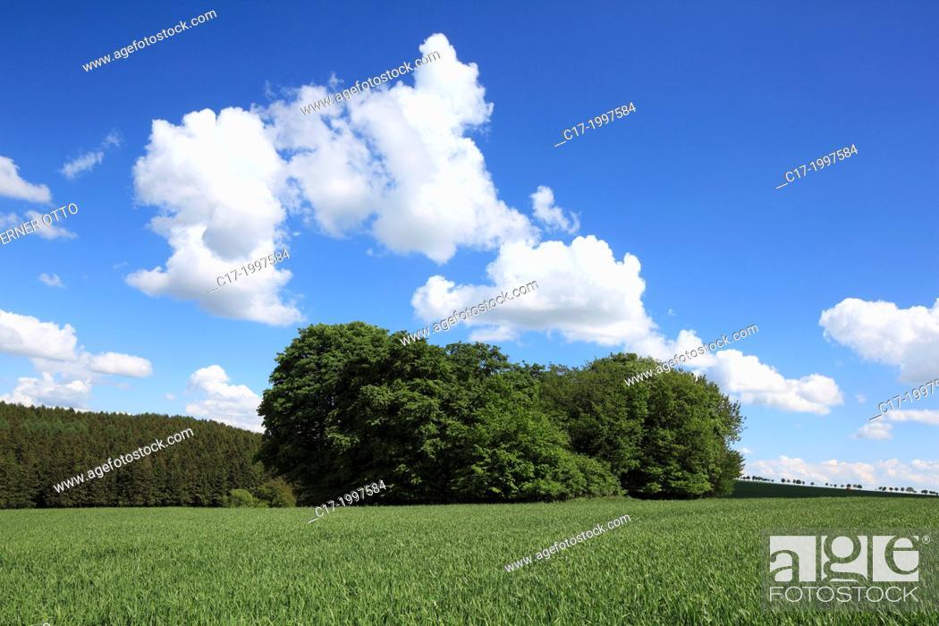 Imagen: Germany, Lichtenau (Westfalen), Buerener Land, Paderborn Plateau, Eggegebirge, Teutoburg Forest / Egge Hills Nature Park, East Westphalia, Westphalian Lowland.