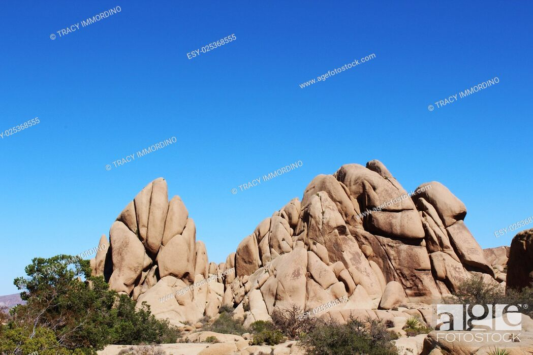Stock Photo: Unique rock formation with scrub brush, mesquite and yucca trees at the Jumbo Rocks Campground in Joshua Tree National Park, Twentynine Palms, California, USA.