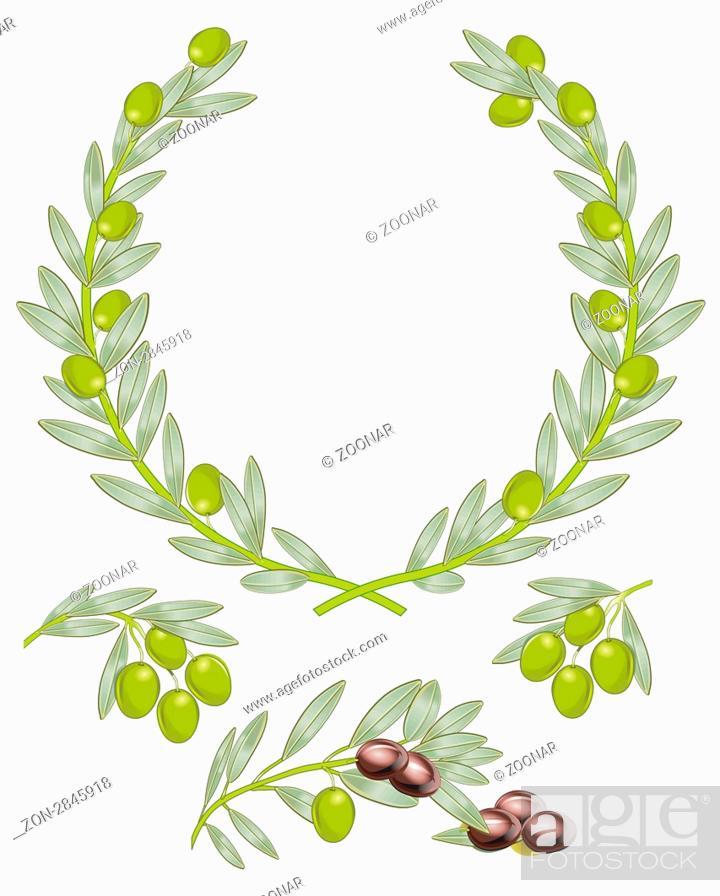 Stock Photo: Oliven Zweige mit Oliven isoliert auf weiß.
