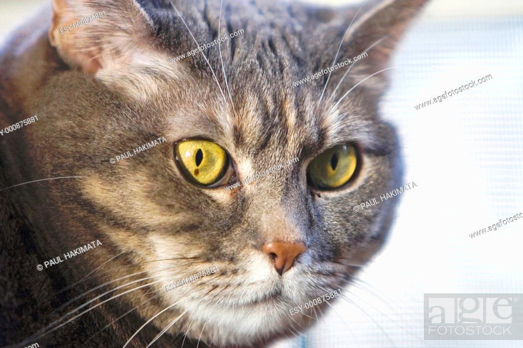 Stock Photo: Cat's green eyes.