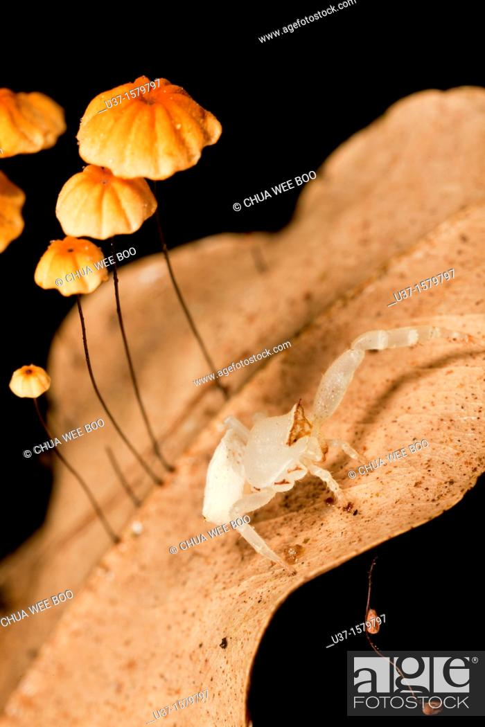 Stock Photo: Crab spider and leaf mushrooms.
