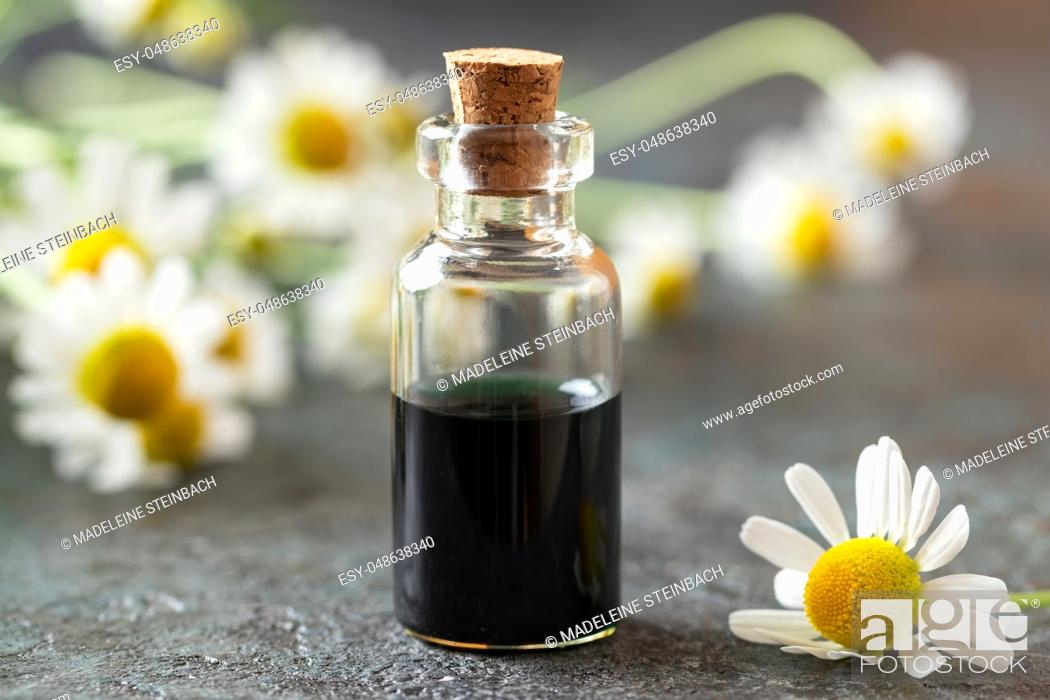 Stock Photo: A bottle of dark blue German chamomile essential oil and fresh flowers.