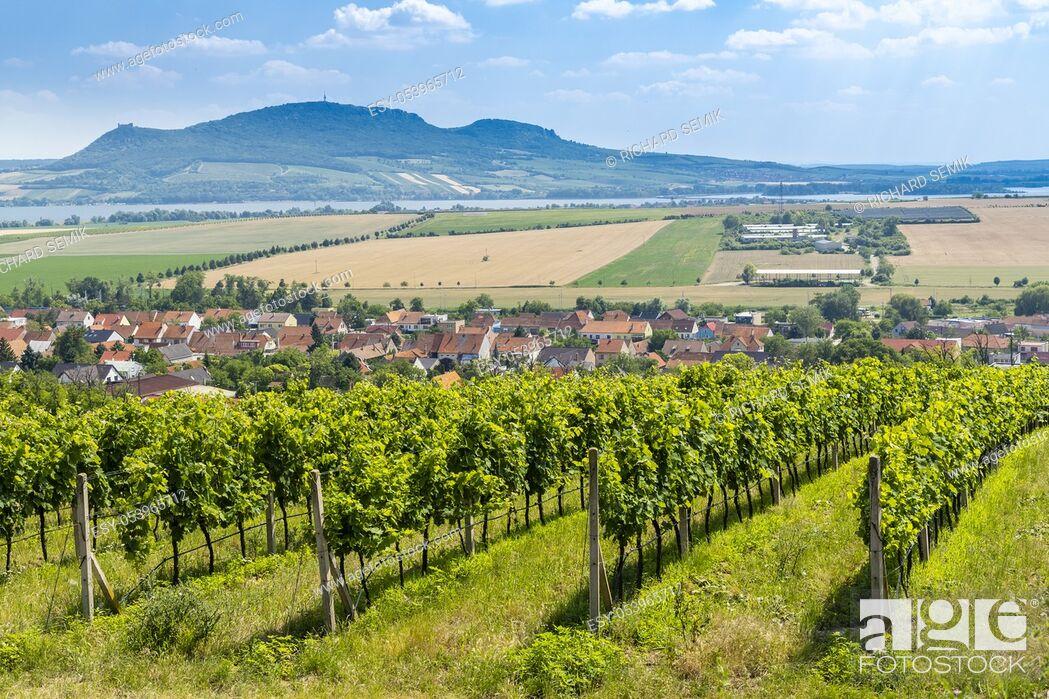 Stock Photo: Palava with vineyards near Popice, South Moravia, Czech Republic.